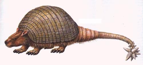 7 Glyptodon
